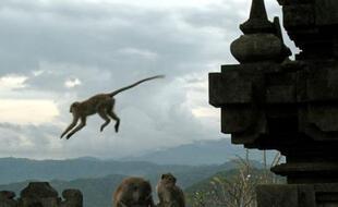 Des singes jouent dans le temple hindou de Bali (illustration).
