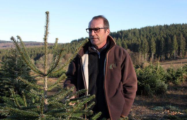 Frédéric Naudet, producteur de sapins de Noël dans le Morvan, le 1er décembre 2016.