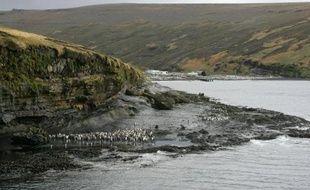 Photo prise le 01 juillet 2007 d'un groupe de manchots sur l'île de la Possession dans l'archipel des Crozet (Terres Australes et Antarctiques Françaises)