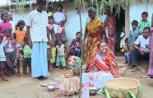Decoration Indienne Pour Mariage : Inde elle se marie avec un chien pour conjurer le mauvais