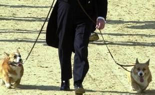 Le corgi, animal de compagnie préféré de la reine d'Angleterre, est menacé de disparition, s'alarme le Kennel Club qui se présente comme l'institution la plus importante en matière de protection des chiens au royaume des amis des bêtes.