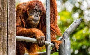 Puan était âgée de 62 ans alors que les femelles vivent rarement plus de 50 ans.