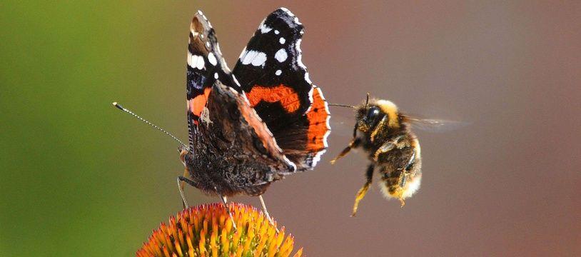 Les insectes volants jouent en effet un rôle crucial dans la pollinisation de 80% des plantes sauvages.