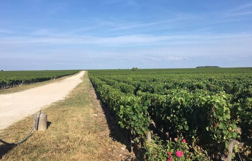 Bordeaux : Le casse-tête des viticulteurs pour sortir du glyphosate