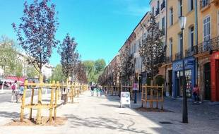 L'érable plane, une espèce qui pousse originellement dans les montagnes, a été planté sur le cours Mirabeau d'Aix en Provence.