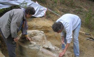La découverte d'un mastodonte des Pyrénées a été réalisée au sud de la Haute-Garonne.