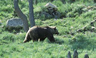 Ours dans les Pyrénées