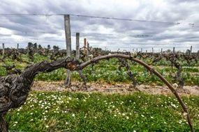 Dans un vignoble près de Bordeaux, le 10 avril 2021.