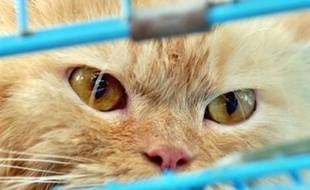 Un vaccin contre l'allergie aux chats a été testé avec succès sur... des souris, a annoncé vendredi l'Institut suisse de recherche sur les allergies et l'asthme (SIAF).