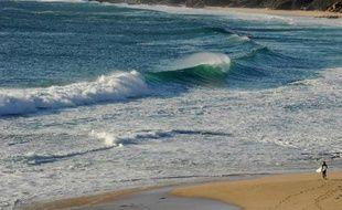 L'Australie a donné mardi son feu vert à l'élimination des requins repérés à proximité des plages très fréquentées de la côte ouest après une série d'attaques mortelles, une décision vivement critiquée par les écologistes.