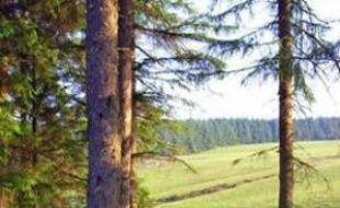 Forêt de Crychan, Royaume-Uni