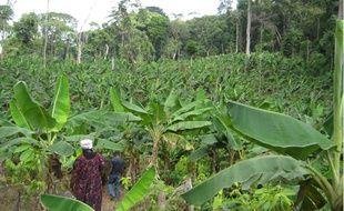La création de ce verger écologique a permis de redynamiser l'ensemble de l'économie du village.