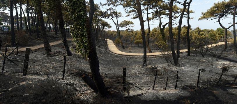 L'incendie a détruit 100 hectares de forêt à Anglet.