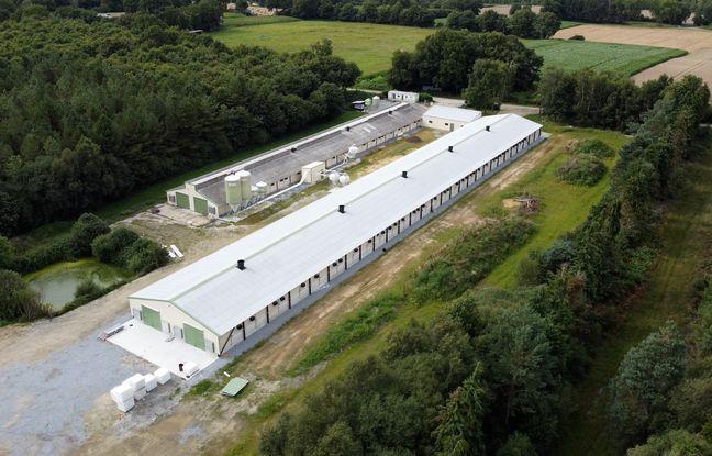 A Ploërmel, dans le Morbihan, un élevage intensif de poules et coqs a été épinglé par l'association L214. L'éleveuse a sollicité une nouvelle demande d'agrandissement.