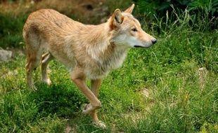 Le Parc national des Cévennes a demandé à être une zone d'exclusion pour le loup, lors d'une réunion du Conseil d'administration le 18 octobre a-t-on appris samedi auprès du maire d'Hures-la-Parade, André Baret.