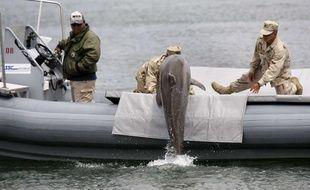 Un dauphin lors d'un entraînement de l'armée américaine dans le port de San Francisco, le 18 mai 2010.
