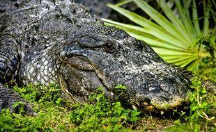 Des crocodiles sont soupçonnés de rôder au large du Port Douglas Marina dans le Queensland.