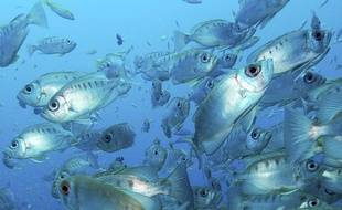 Banc de poissons en mer des Seychelles.