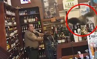 Un paon alcoolique braque un magasin d'alcool - Le Rewind