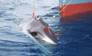 Deux navires baleiniers japonais et un navire de surveillance sont partis samedi de l'archipel nippon pour leur chasse annuelle dans l'Antarctique, ont indiqué les médias.