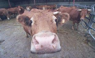 Les Etats-Unis ont annoncé avoir détecté un cas de maladie de la vache folle en Californie (ouest), tout en tentant de rassurer les consommateurs quant à la santé du bétail, mais de premières restrictions sur le boeuf américain ont été prises mercredi en Corée du Sud.