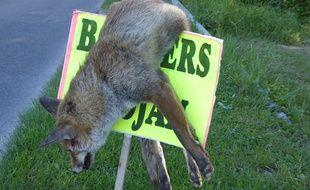 Le cadavre d'un renard a été exposé sur un panneau près du camping de Cognac.