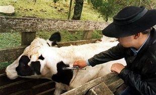 La fièvre catarrhale ovine frappe également les bovins