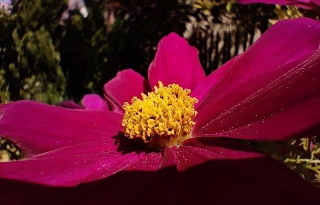 Une fonction photo Macro appréciée en plein printemps confiné.