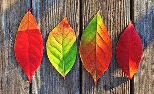 Illustration de l'automne