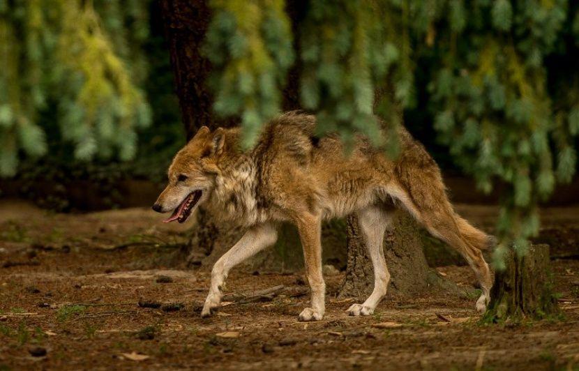 VIDEO. Etats-Unis: Un animal inconnu découvert dans un parc du Montana intrigue les chercheurs