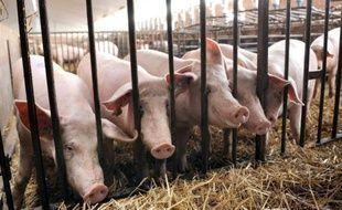 La charcuterie française se prépare à être enfin autorisée en Chine et à rivaliser avec ses concurrentes italienne et espagnole déjà bien présentes dans ce pays où la viande de porc est la plus appréciée, au point qu'il abrite plus de la moitié du cheptel porcin mondial.