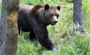 """Le Parlement européen presse le gouvernement français de prendre rapidement les mesures nécessaires pour la préservation de l'ours brun dont la situation est """"critique"""", ont indiqué mercredi les défenseurs du plantigrade."""