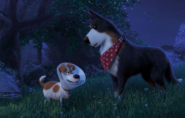 Max et Rico dans «Comme des bêtes 2» de Chris Renaud et Jonathan Del Val