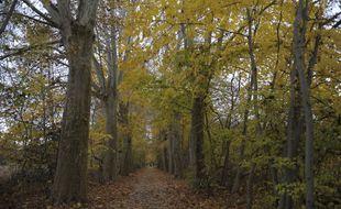 Illustration. Un chemin dans une forêt du Bas-Rhin.