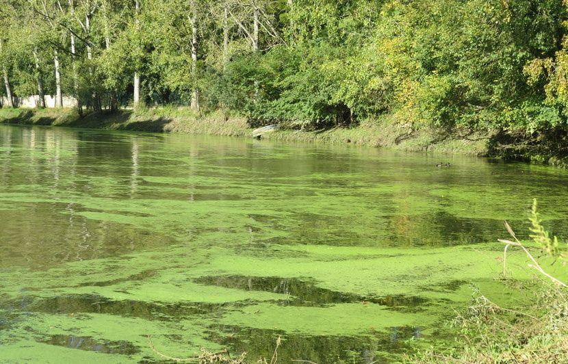 Loire-Atlantique: Mais quel est ce tapis vert qui a recouvert la Sèvre nantaise?
