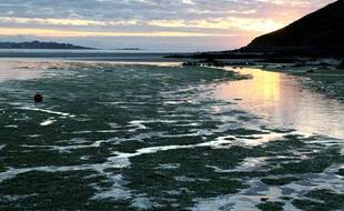 Des algues vertes échouées sur la plage de Saint-Michel-en-Grève dans les Côtes d'Armor, le 26 juillet 2011.