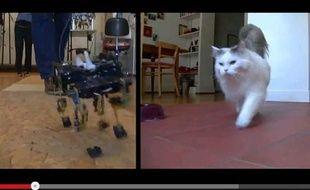 Capture d'écran d'une vidéo comparant un robot suisse à la course d'un chat, le 17 juin 2013.