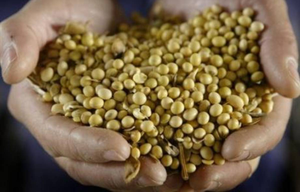 Le groupe agrochimique américain Monsanto a révisé nettement à la hausse ses objectifs de résultats pour 2008, grâce à ses semences génétiquement modifiées et aux herbicides, et s'est dit en avance sur son plan stratégique à objectif 2012, selon un communiqué publié mardi. – Scott Olson AFP/GETTY IMAGES