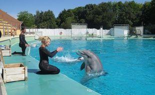 A Port saint père, le 29 mai 2015- Les dauphins du parc animalier Planete Sauvage