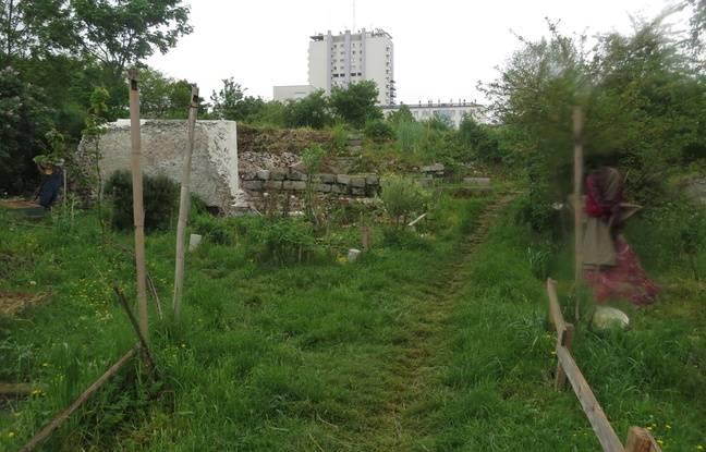Le site des murs à pêches de Montreuil : une oasis au pieds des tours de béton.
