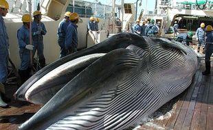 Le Japon a annoncé son intention de reprendre la chasse à la baleine, le 25 décembre 2018.