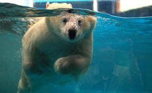 Un ours polaire nage dans un bassin en Chine.