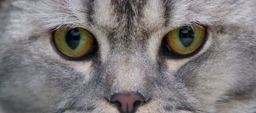 Si le projet aboutit, les chats ne seront plus les bienvenus à Omaui (Illustration).