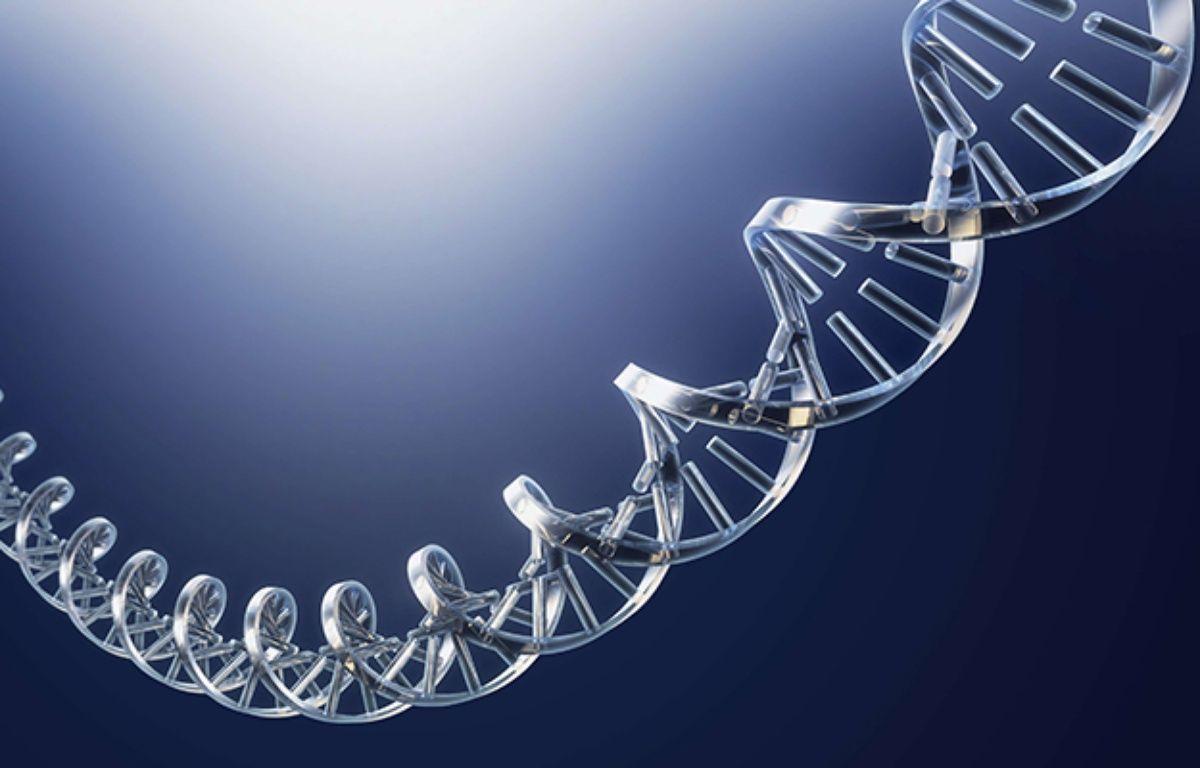 Un fragment d'ADN. –  PURESTOCK/SIPA