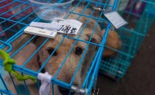 """""""L'animal avait cinq fois moins d'espace que dans un refuge SPA"""", selon l'un des policiers intervenus à Saint-Cyr-l'Ecole, le 16 juillet. (Illustration) APLAVEVSKI"""