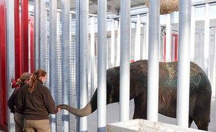 Arrivée de l'éléphanteau Shawu au parc zoologique de La Teste-Arcachon, le 29 avril 2016