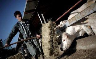Un éleveur nourrit les bovins de son élevage, le 4 avril 2008 dans une écurie à Saint-Firmin (Saône-et-Loire), une commune rurale dont le cheptel avait été affecté à l'époque par la fièvre catarrhale ovine