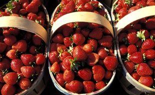 Les fraises de Carpentras sont confrontées à la concurrence directe des fraises espagnoles.