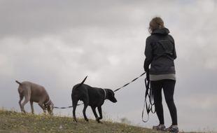 La plateforme Gudog met en relation des propriétaires et des dogsitters