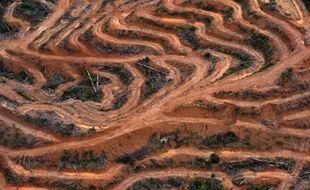 Photographie aérienne du 24 février 2014 au-dessus de la province centrale de Kalimantan dans l'île indonésienne de Bornéo, où de s'observent des zones de déforestations
